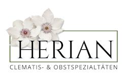 Clematis Herian