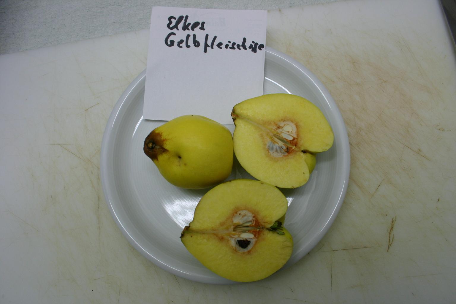 Quitte 'Elkes Gelbfleischige'