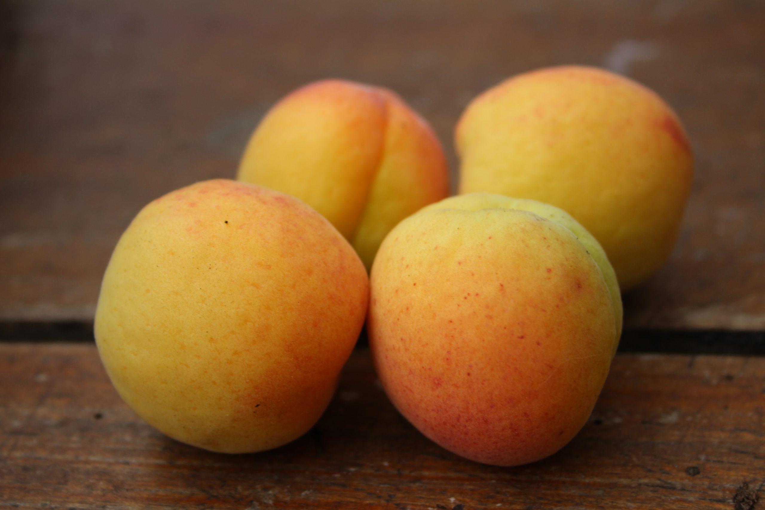 Aprikose 'Mombacher Frühe'